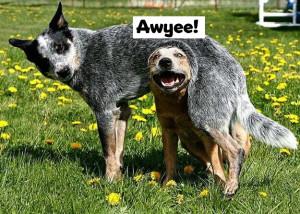 dogs awyee