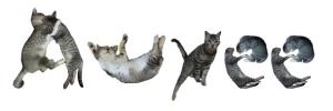 awyee cats